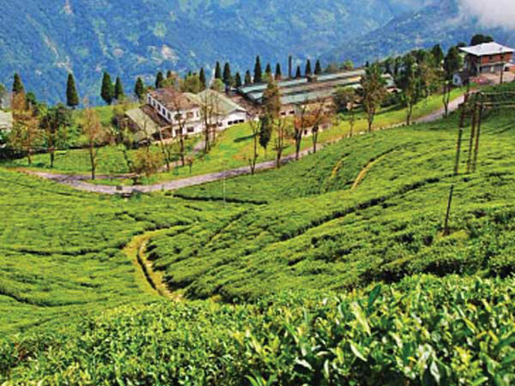 A resort for tea lovers image